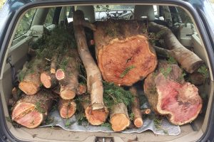yew-logs-in-car