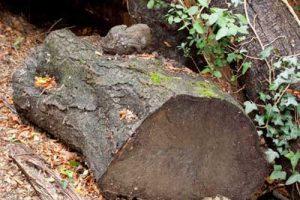old-log